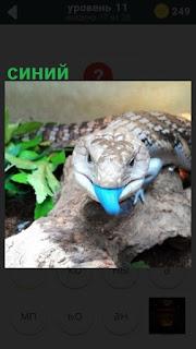 рептилия высунула синий язык и ползет