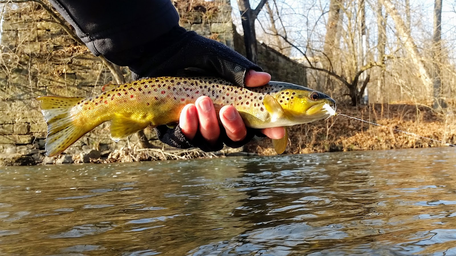 Sick days fishing december 18 to 22 2016 a fishing for Stocked trout fishing