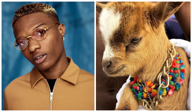 Is Wizkid Normal? See What Daddy Yo Unveiled As His New Pet (Photo)