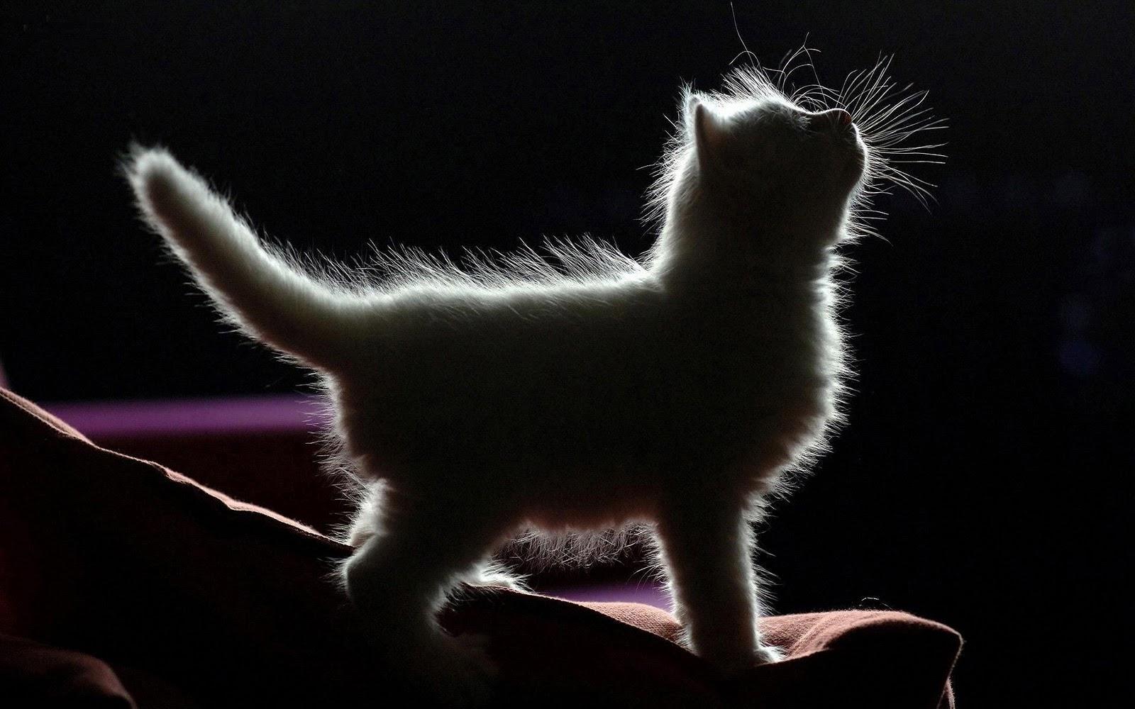 zwart-wit poesje Fotos grote lul in de wereld
