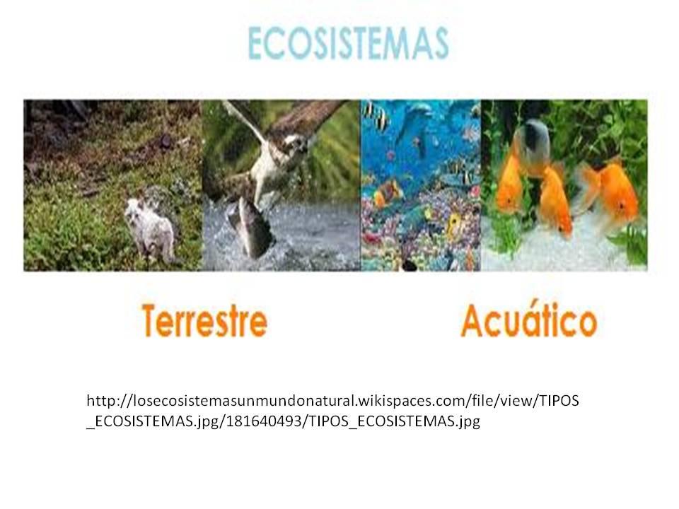 Mi entorno un ecosistema viviente tipos de ecosistemas for Medio en el que habitan los arboles