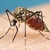 Hati-Hati! Virus Zika Bisa Menular Lewat Air Mata