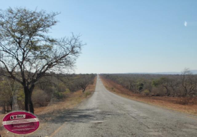 Libertad absoluta durante nuestro safari