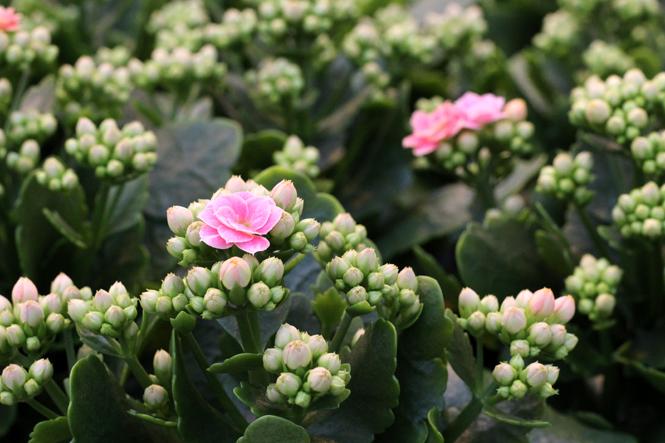 Köstliches und Florales von unserem Nachbarn / Mo'Beads / Monika Thiede