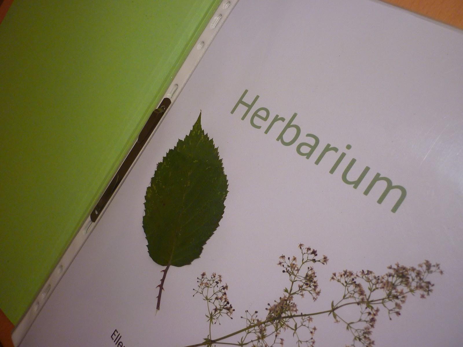 bodenseewellen herbarium das zweite. Black Bedroom Furniture Sets. Home Design Ideas