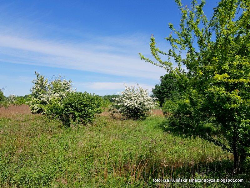 laka, nad wisla, zielono mi, spacer, wycieczka, krzewy, trawa, na lace, za miastem