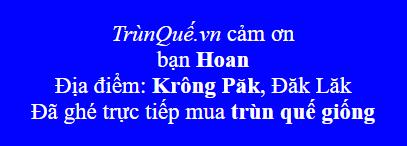 Trùn Quế về huyện Krông Păk