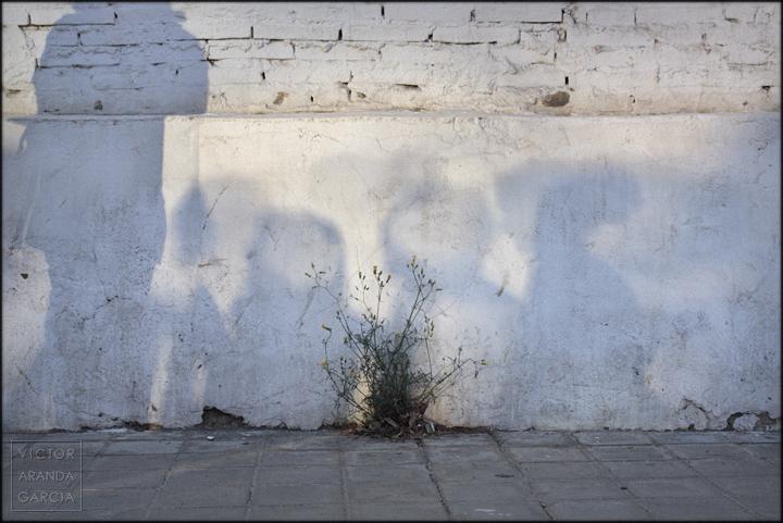 naturaleza,urbana,valencia,serie,fotografia,arte,sombras,reflejo