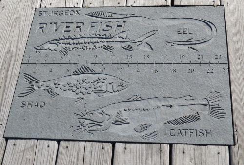 plaque for fish identification