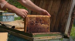 1071138838 - Mieles Amargas: Los efectos del 'Ingrediente de Monsanto' que están matando las abejas. - El Apicultor Español: Actitud y Aptitud Apícola