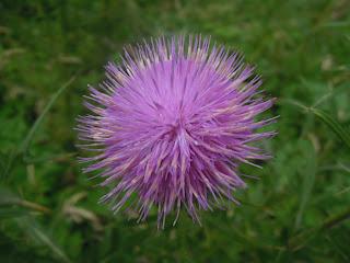 fleur france