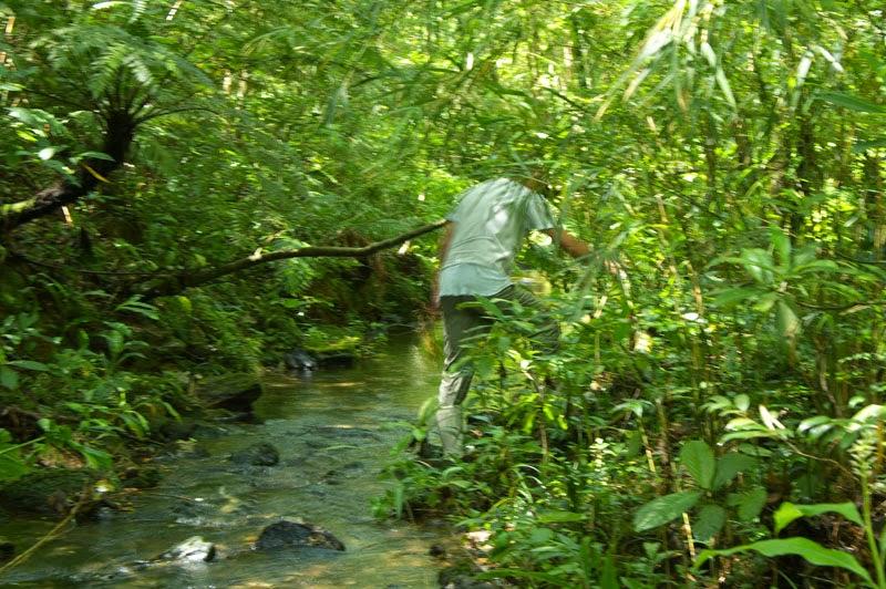 stream trekking