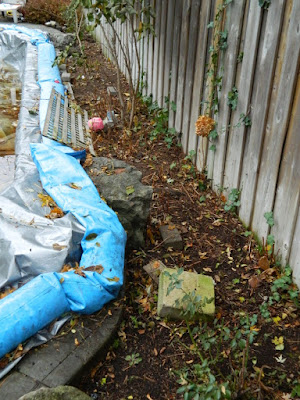 Bedford Park Toronto Garden Fall Clean up after by Paul Jung Gardening Services