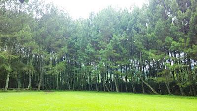 WIsata Hutan Pinus Pine Forest Camp Lembang