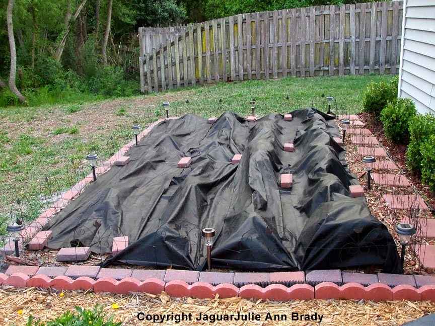 Weed Barrier Cloth From Second Roll Covering Sunflower Seedlings ~ JaguarJulie