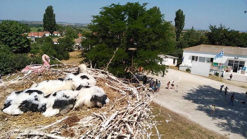 Με επιτυχία το 3ο Φεστιβάλ Πελαργών στον Πόρο Φερών