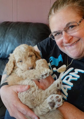 Training a Service Dog.... My Journey So Far by Stacey Kuhns