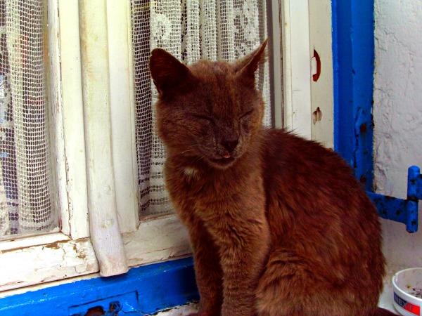 mykonos town cat