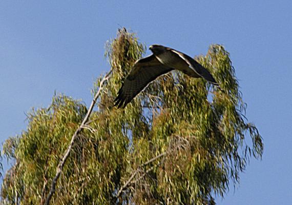 bird soaring high