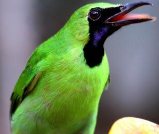Kisaran Harga Saat Ini Obat Untuk Mengatasi Suara Hilang Pada Burung Terbaru Dan Terlengkap