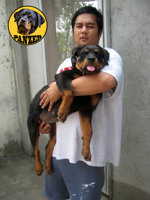 Rottweiler at 4 months photo