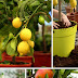 Awesome DIY Small Garden Ideas for Tiny Spaces