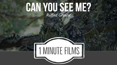 Nature Films
