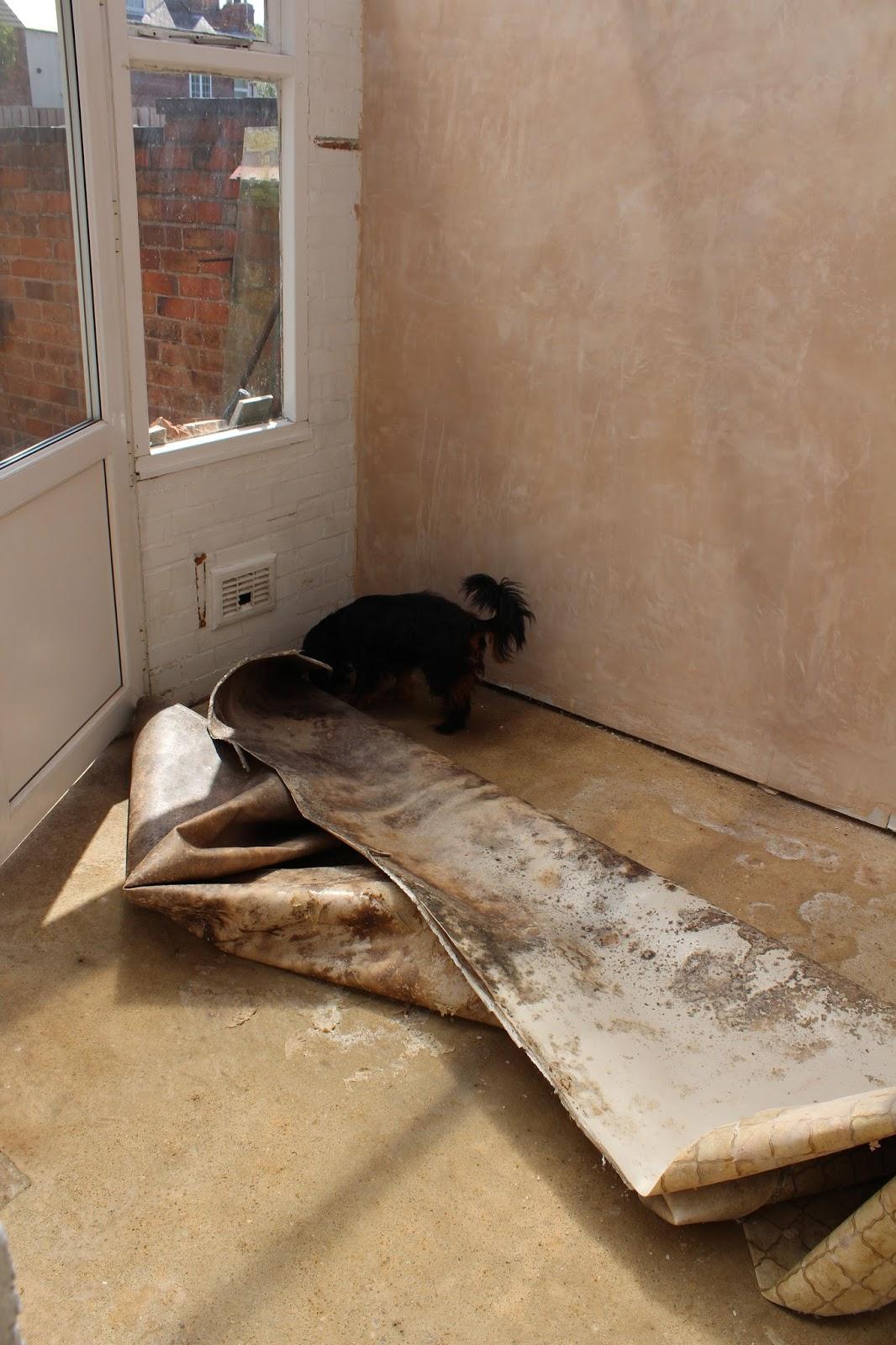 Removing dank lino floor
