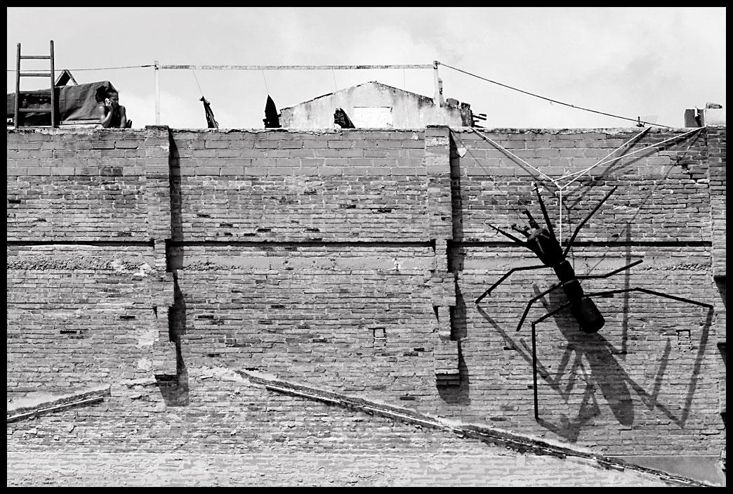 Memoria visual de un desmemoriado sos tengo hormigas - Plaga de hormigas en mi casa ...