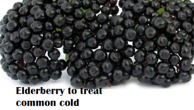 Elderberry to treat common cold and sore throat