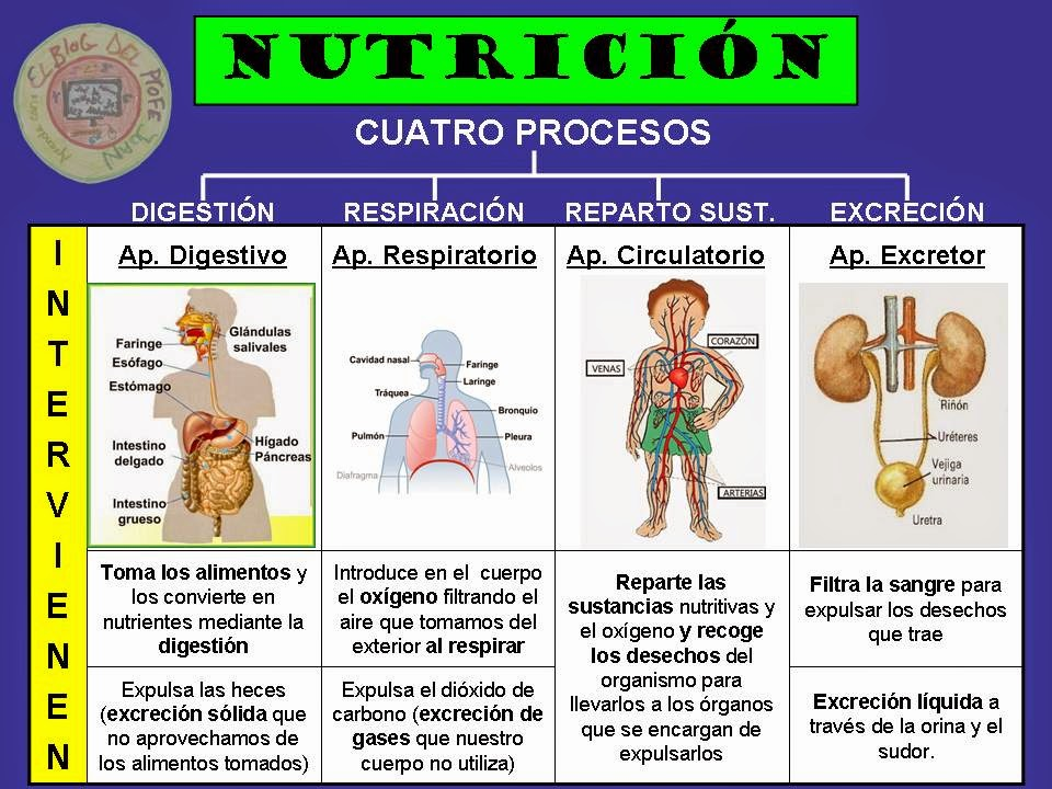 Funciones del cuerpo humano para niños