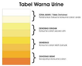 warna-urine-menunjukkan-kecukupan-air-dalam-tubuh,www.healthnote25.com