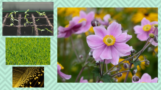 A selection of photos: grass, flowers, lights.