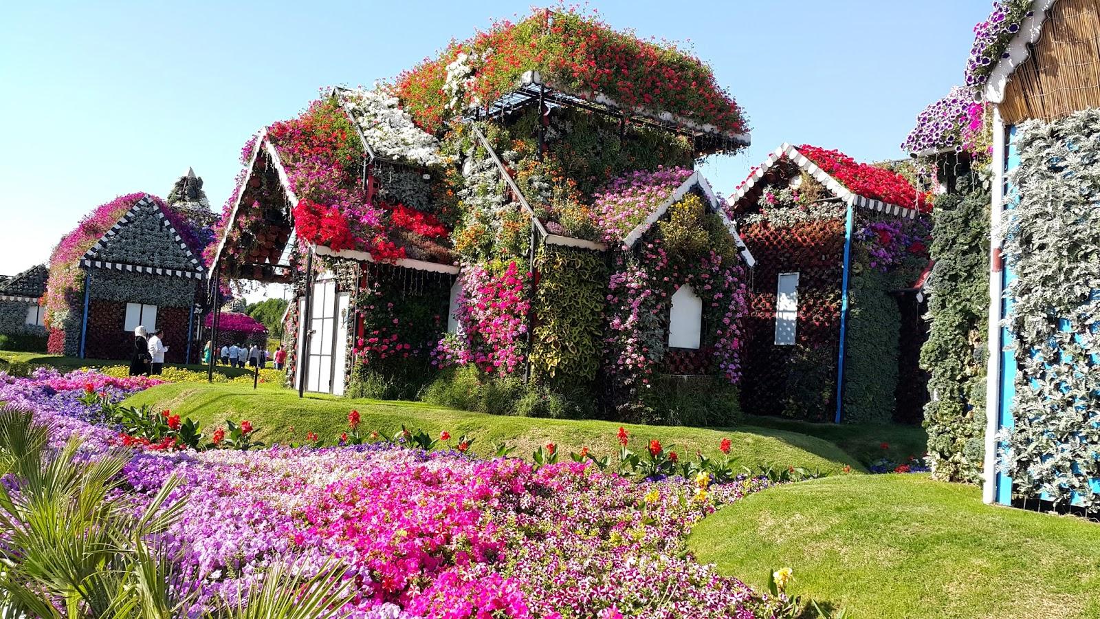 ENJOY LIFE!: Flowers of Dubai Miracle Garden