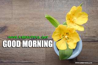 Good Morning and Have a great day Text message with  flower wishes Yellow Tulip flower Background.