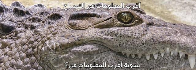 أغرب المعلومات عن الحيوانات