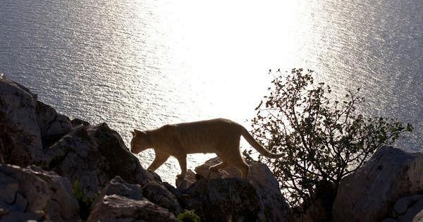calp natural park peñón de ifach