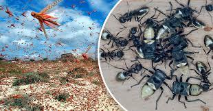 los insectos se están extinguiendo a nivel global a un ritmo de 2.5%