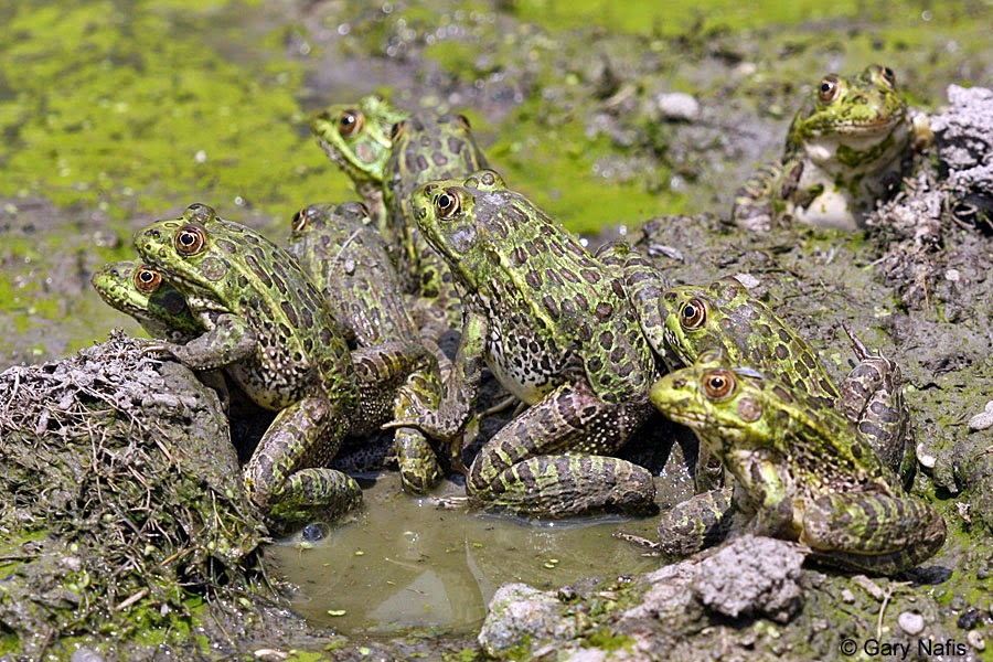 What Is A Group Of Toads Called 15