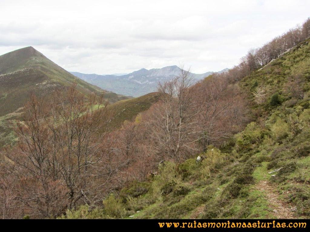 Ruta Peña Redonda: Bosque previo a collado Chera