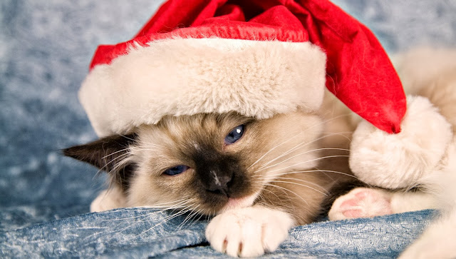 Dieren sfbeelding kat met kerstmuts