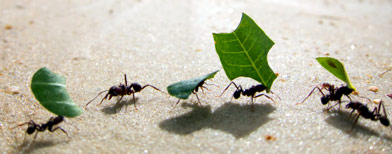 formigas-trabalhando.jpg