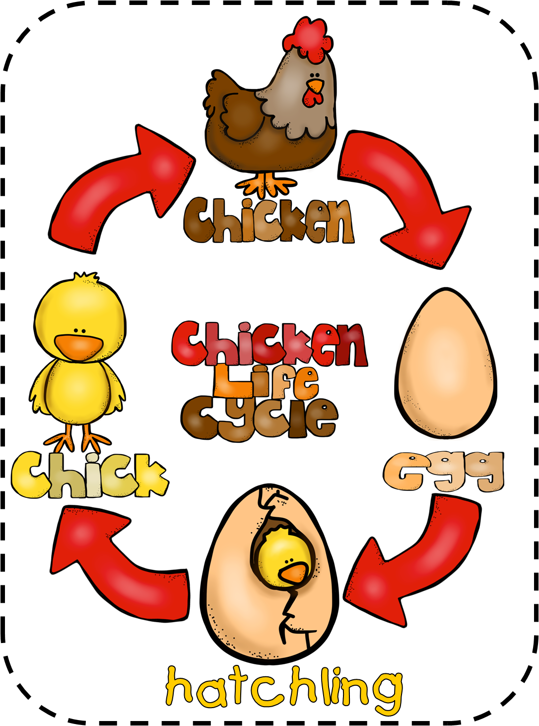 Animal Feet And Chicken Life Cycle