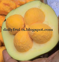 Pequi Health Benefits, fruits and health, dailyfruits.blogspot.com