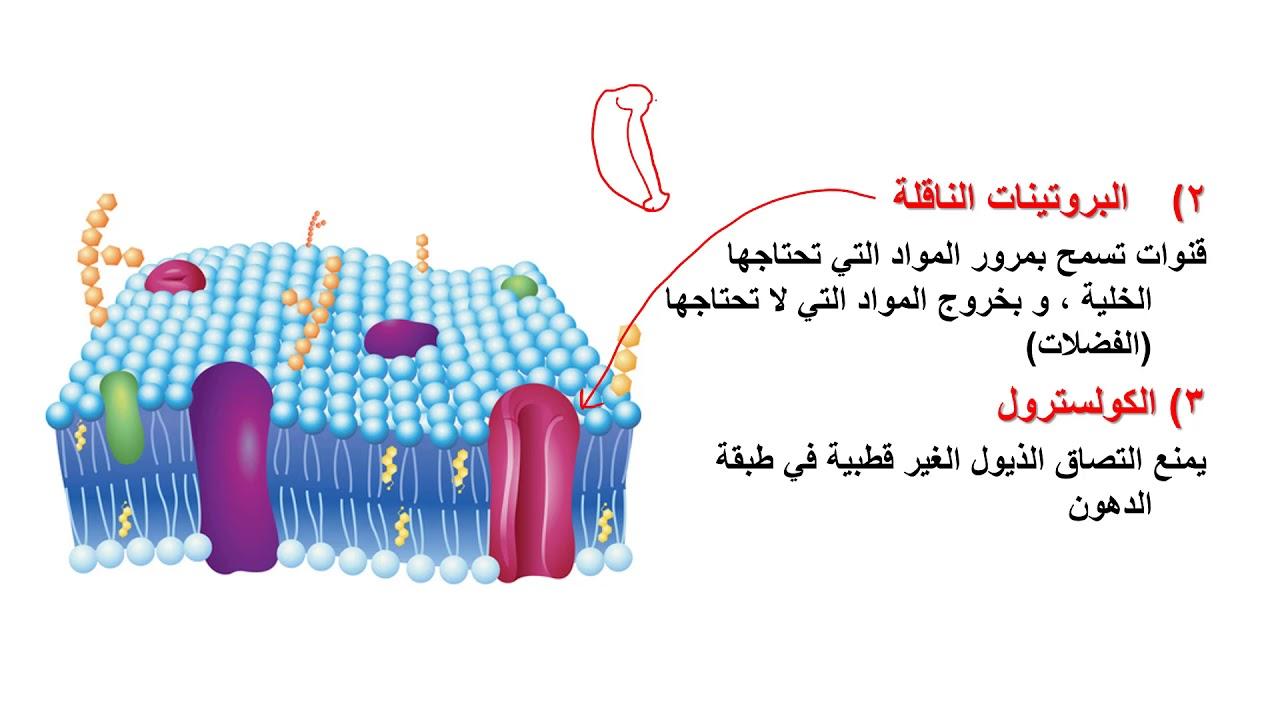 درس التراكيب والعضيات أحياء