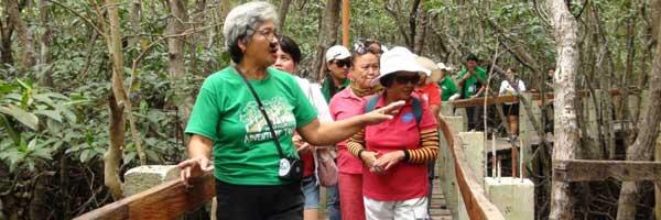 best Mangrove tour in maribojoc bohol philippines 2018 savima mangrove