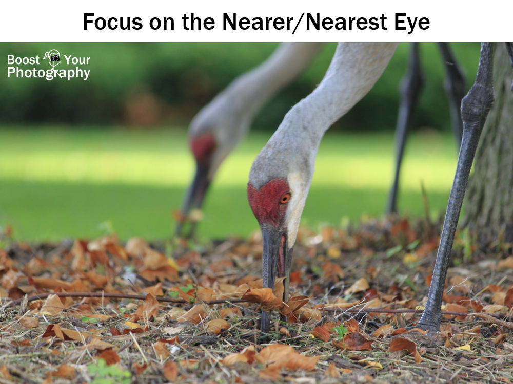 Focus on the Nearest Eye | Boost Your Photography