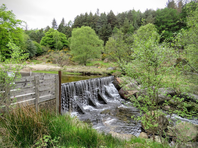 Wicklow Mountains Tour - Water flowing alongside St. Kevin's Way in Glendalough