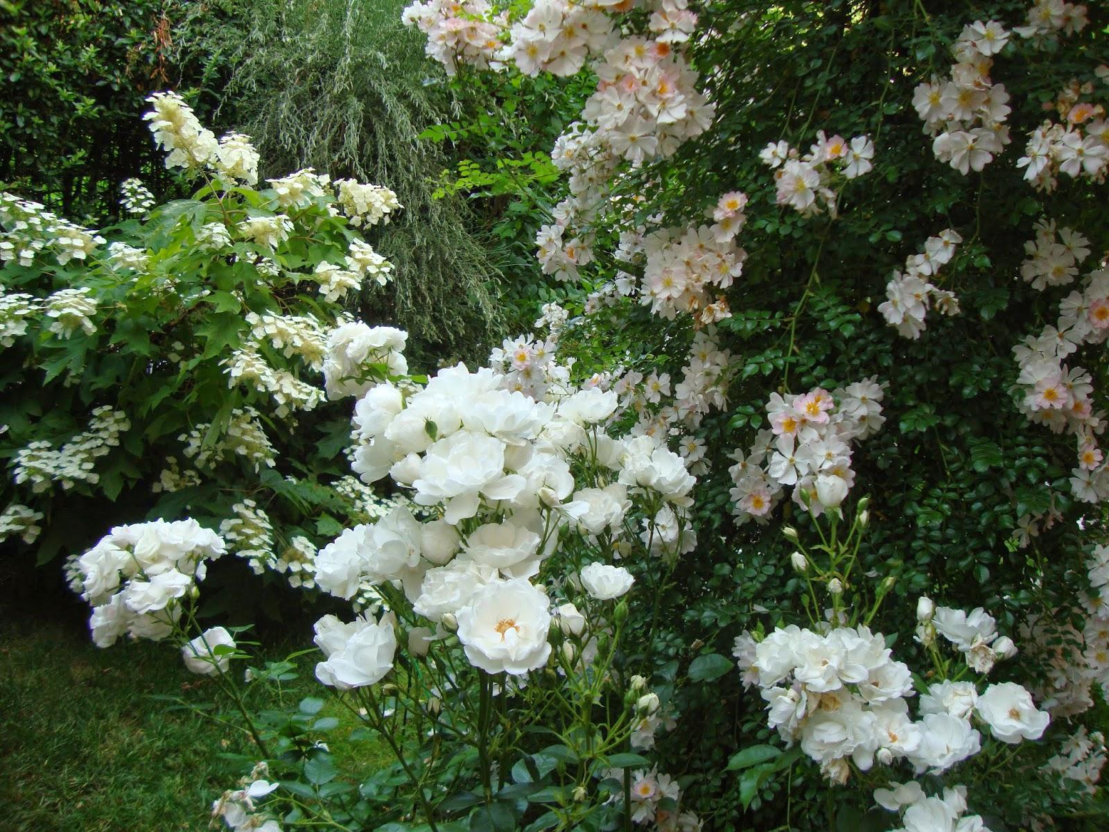 Avere Un Giardino Bianco è Stata Per Me La Naturale Soluzione A Un Problema  Molto Comune Nei Piccoli Giardini Urbani, Spazi Preziosi Per Chi Vive In  Città, ...