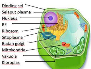 Macam-macam Organel Sel